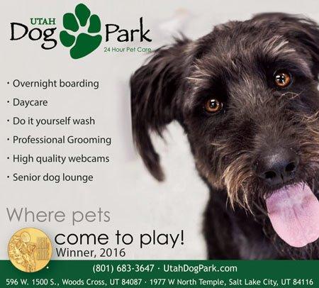 Dog Grooming Slc Utah